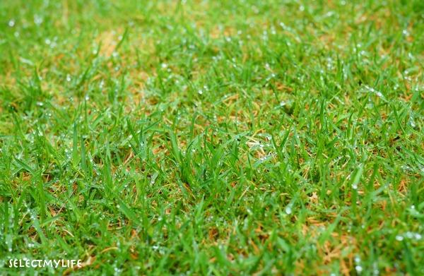 芝生の張り替え方